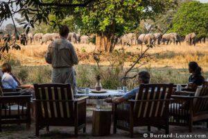 Elephants at Luwi