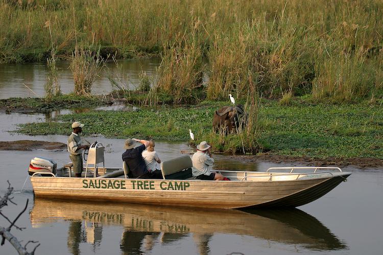 Boat Cruise Zambezi Buffalo