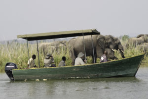 Mvuu boat safari, Shire River