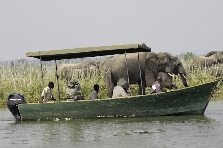 Mvuu boat safari, Shire River