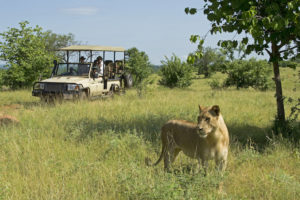 On safari with Chichele