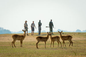 Robin Pope Safaris, walking safari