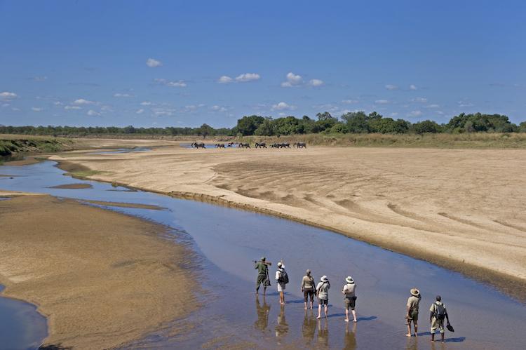 Africa; Zambia; Sanctuary Chichele Presidential Lodge; Walking safari