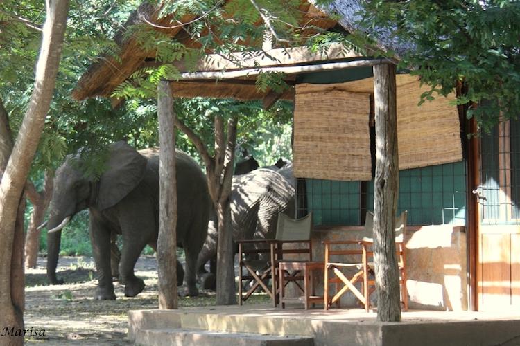 Elephant at Thornicroft