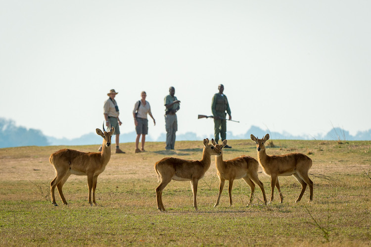 Nkwali walking safari