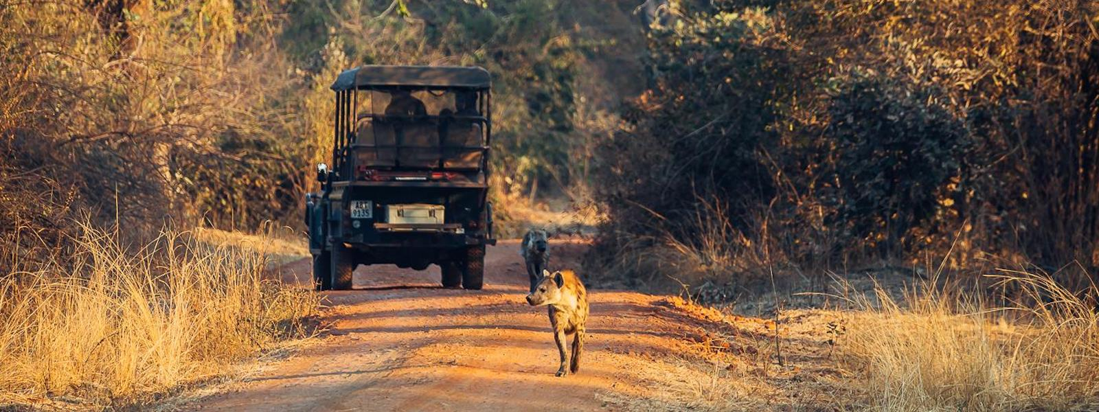 south luangwa safari vehicle and hyenas