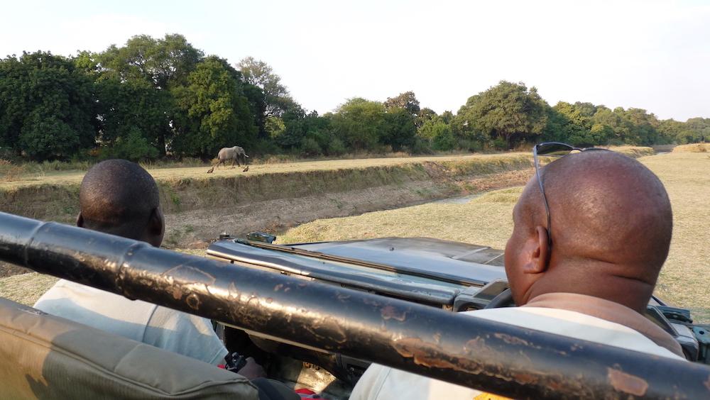 safari with zikomo safari camp