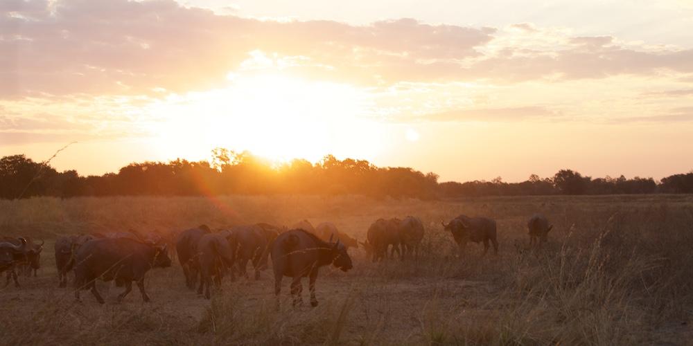 sunset south luangwa