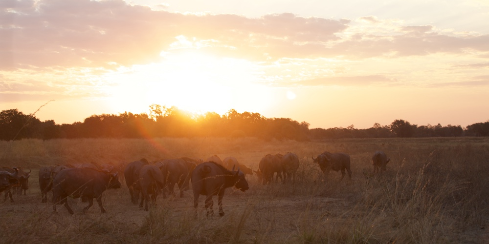 sunset south luangwa