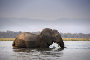 Elephant, Mana Pools