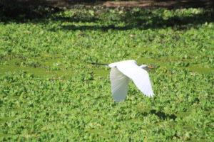 birdlife south luangwa