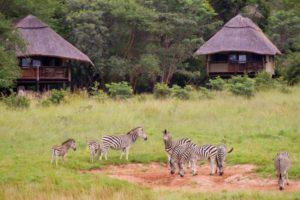 Zebra at Hwange
