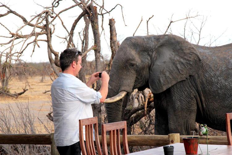 elephant at nehimba lodge