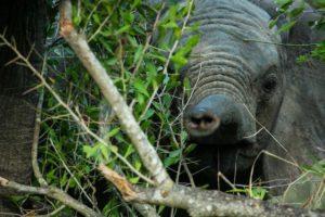 elephant umkumbe