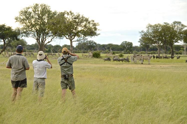 walking safari Hwange