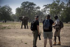 walking safari, mana pools