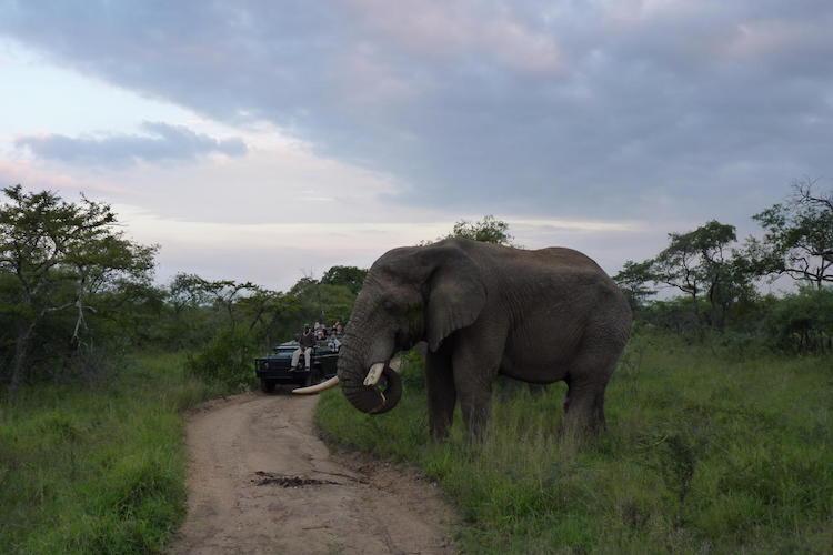 elephant at Sabi Sand