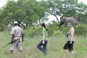 walking safari with elephant