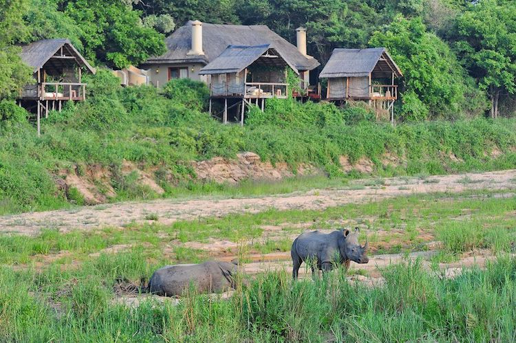 jock safari lodge, rhino