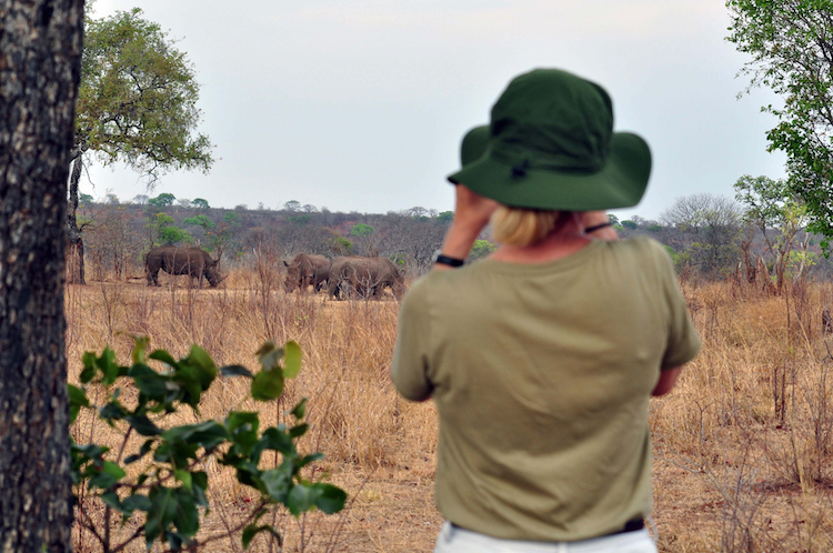 Africa; Zambia; Sanctuary Sussi and Chuma; Rhino walking safari